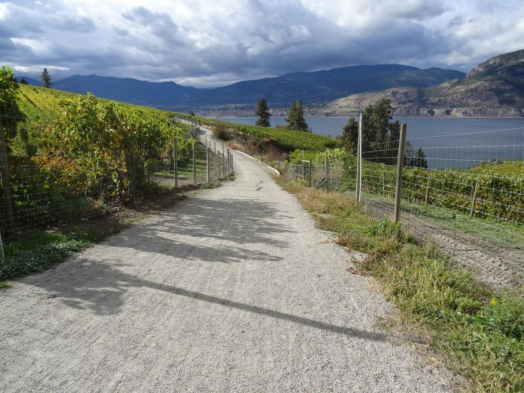 vineyard trails