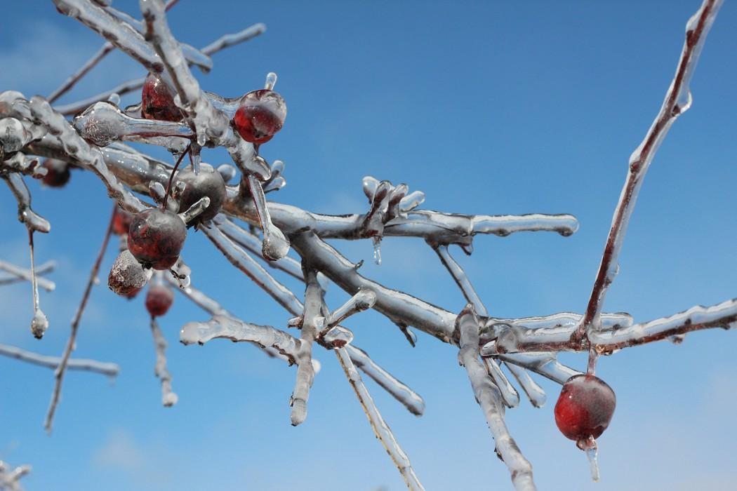 Frozen berries 2