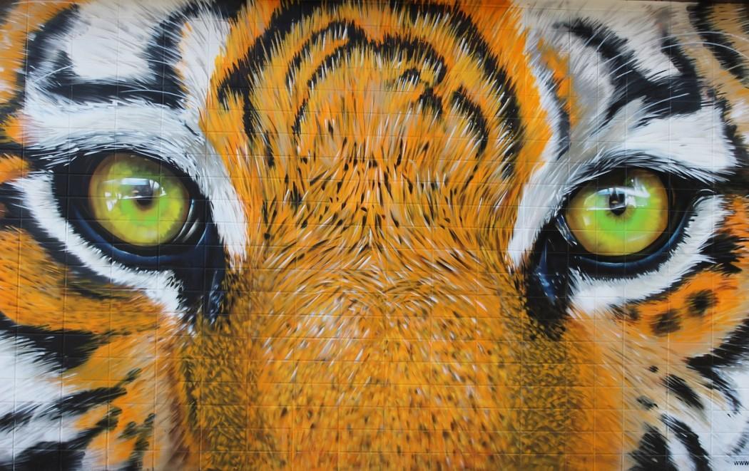 tiger-594575_1280