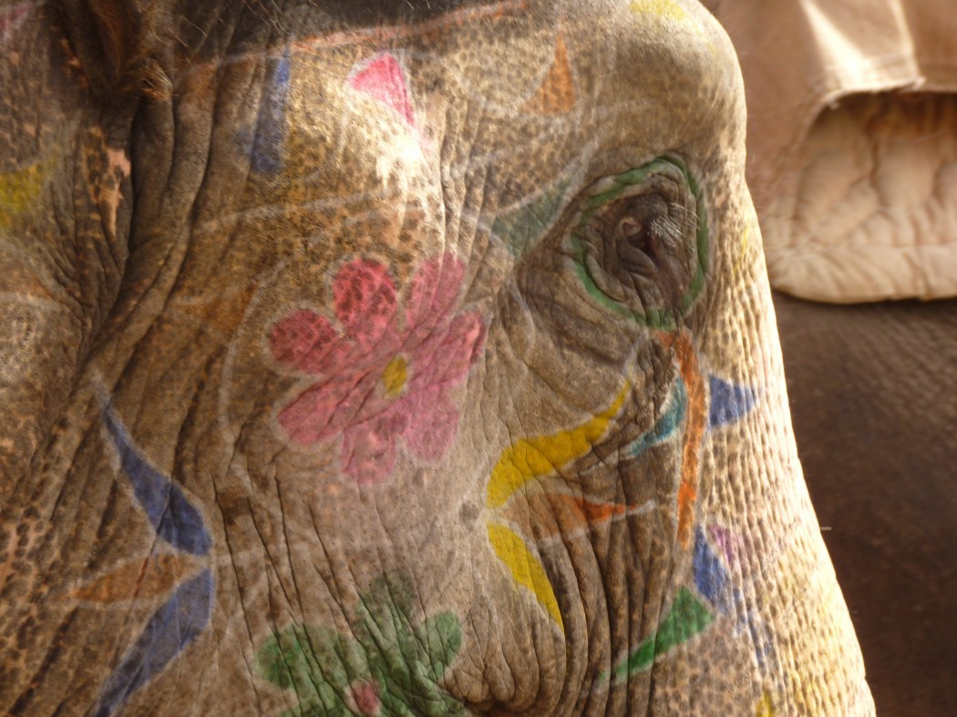 elephant_painted_head