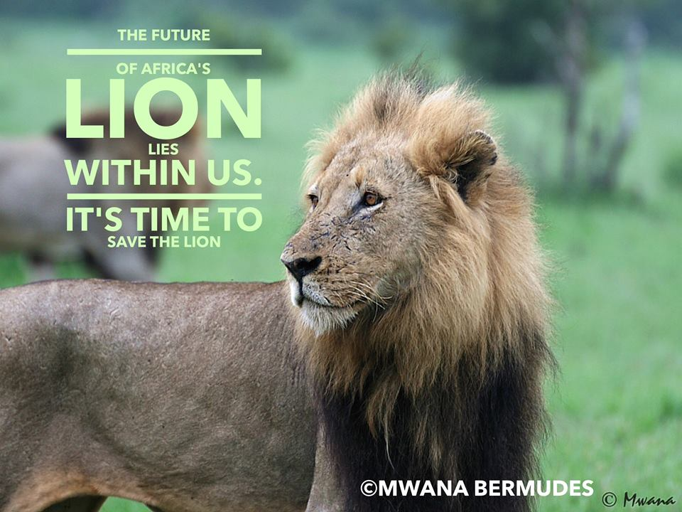 save the lion