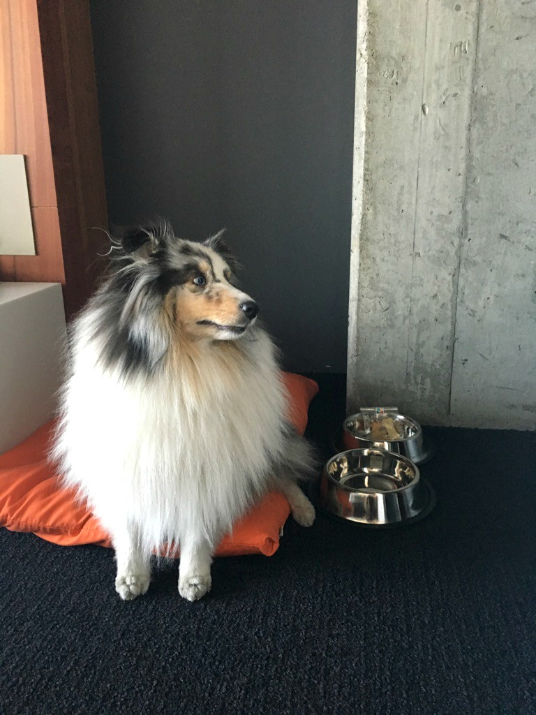 Dog friendly Alt Hotel in Montreal