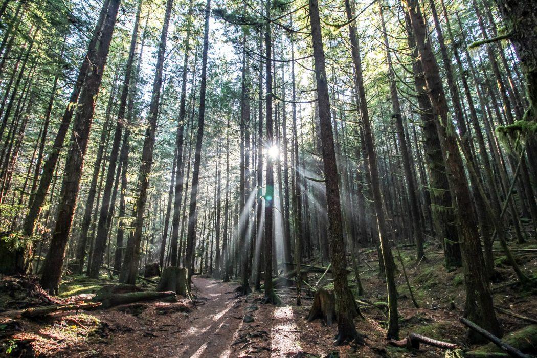 auringonsäteitä metsässä