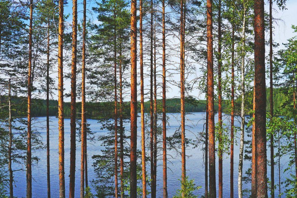 havaintoja Suomesta